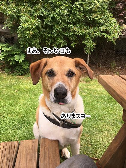 10112020_dogpic4.jpg