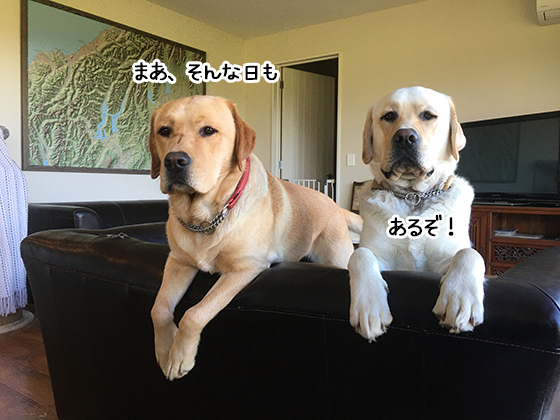 10112020_dogpic5.jpg