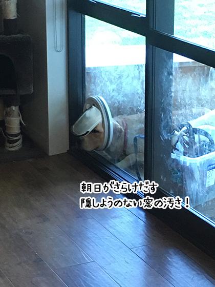 10112020_dogpic6.jpg