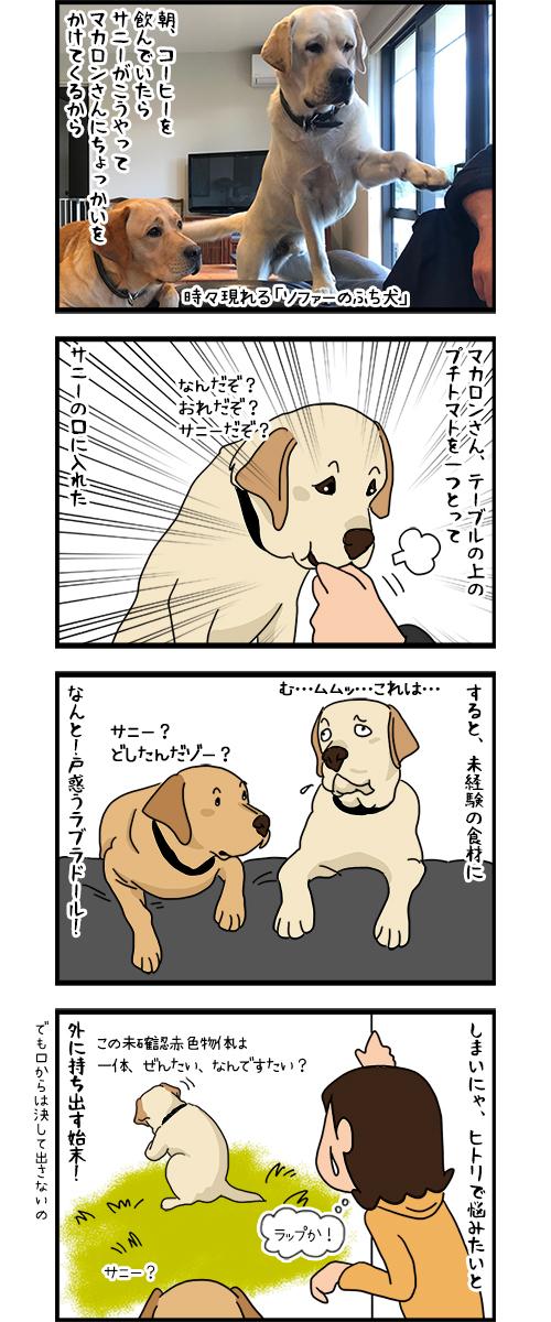 13042020_dogcomic1.jpg