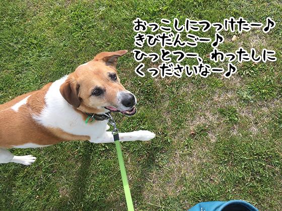 20112020_dogpic2.jpg