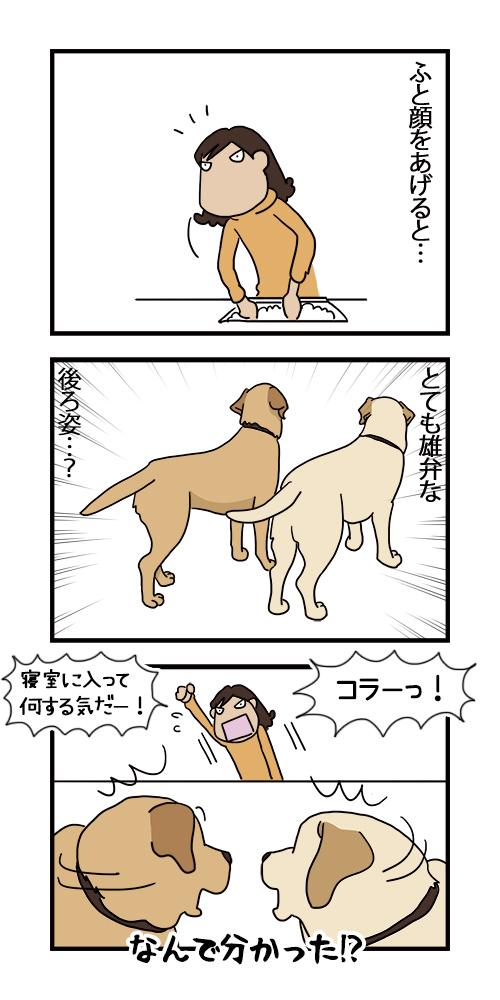 21112020_dogcomic.jpg