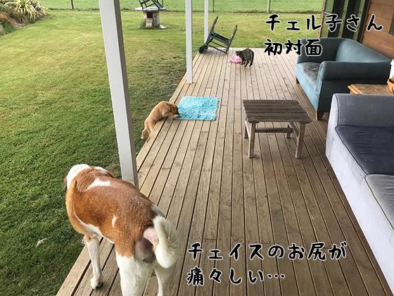 21122020_dogpic1.jpg