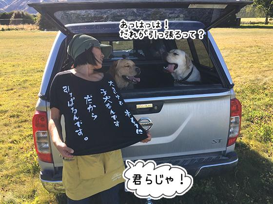 22032020_dog4.jpg
