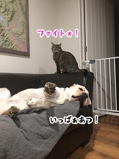 23052020_dogpic5.jpg