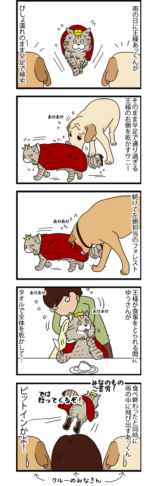 23072020_dogcomic.jpg