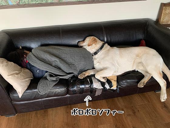 25072020_dog1.jpg
