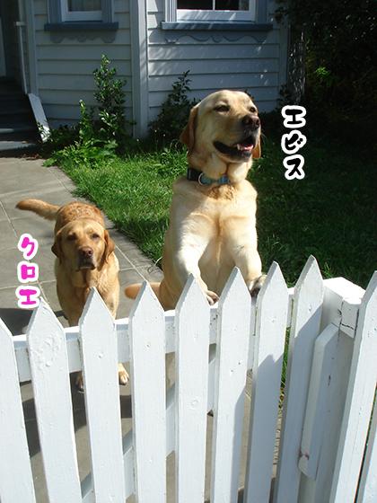 29082020_dogpic8.jpg