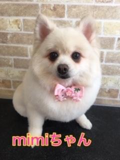 5月8日mimiちゃん