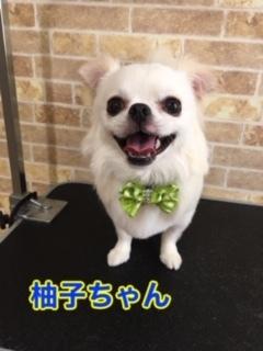6月6日柚子ちゃん