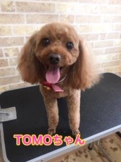 7月3日TOMOちゃん