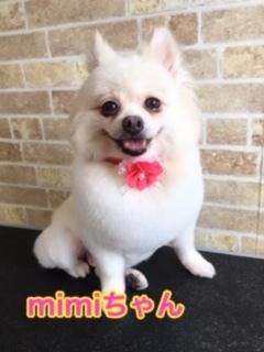 9月10日mimiちゃん