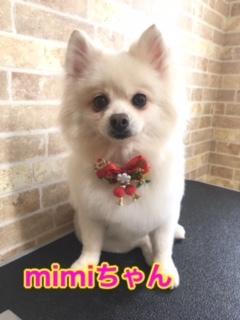 11月25日mimiちゃん