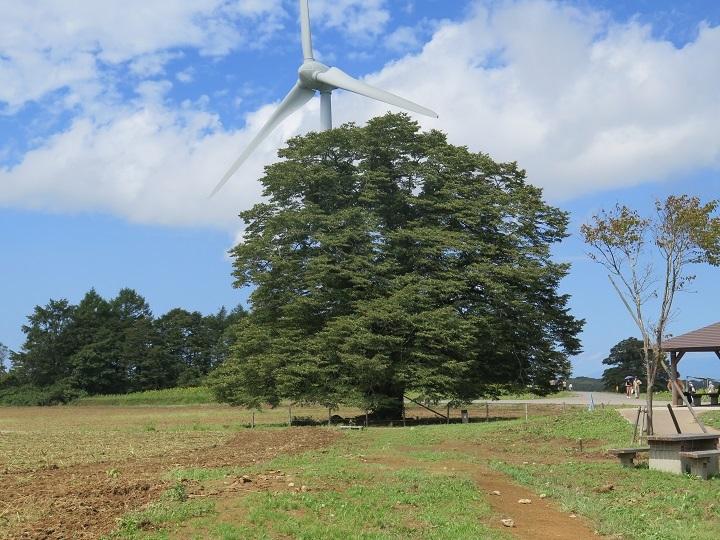 シナノ木と風車