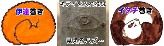 01空目鼬巻き