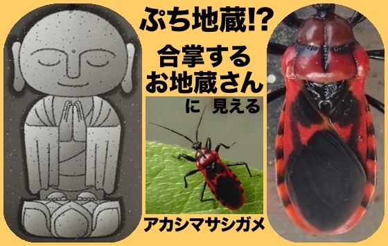 05赤縞刺亀空目地蔵