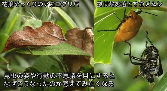 01昆虫の不思議