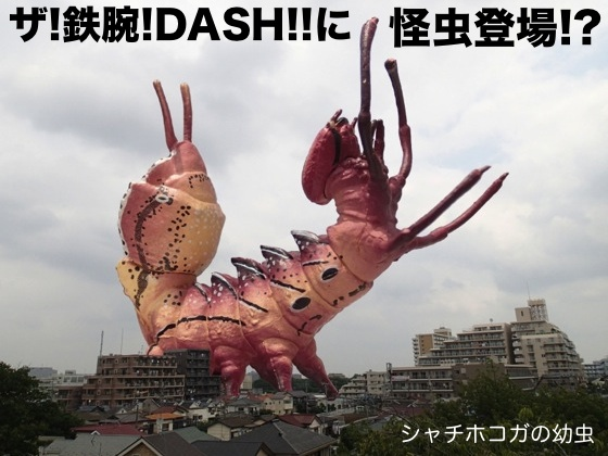 01シャチホコガ幼虫TV