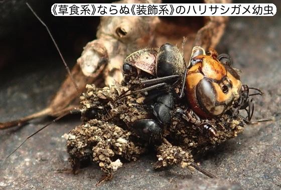 01ハリサシガメ幼虫装飾A