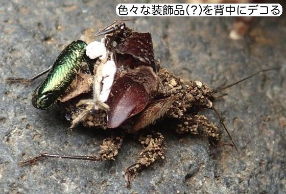 02ハリサシガメ幼虫装飾B