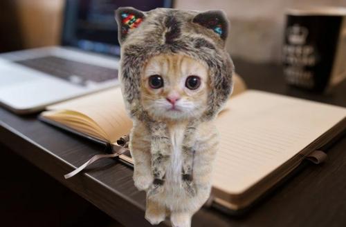猫バスFX