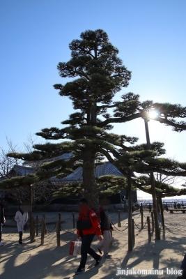 松山城(松山市丸之内)31 鶴の松