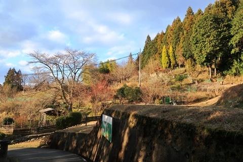 20-2大神神社 (306)