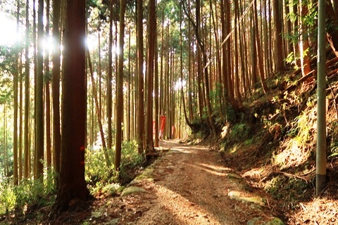 20-2大神神社 (304)