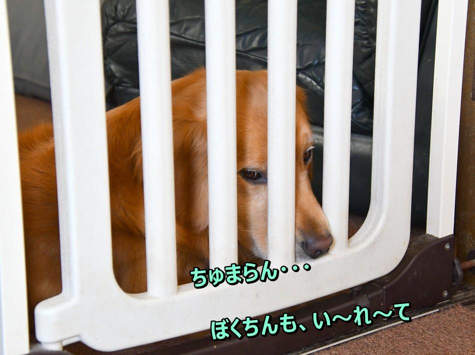 DSC_4442ちゅまらん