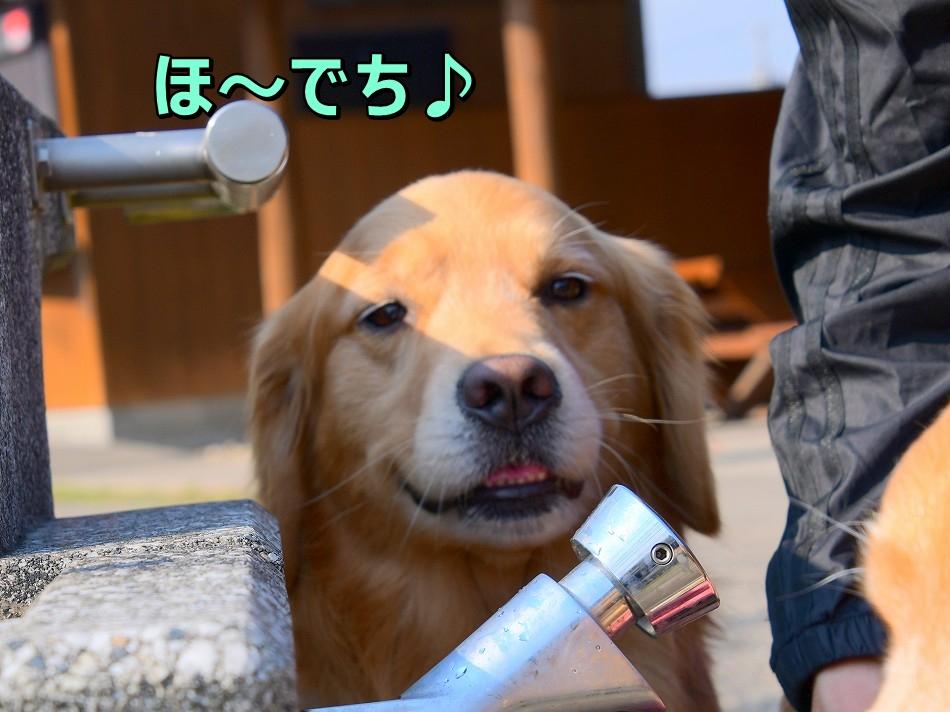 DSC_4775ほ~でち
