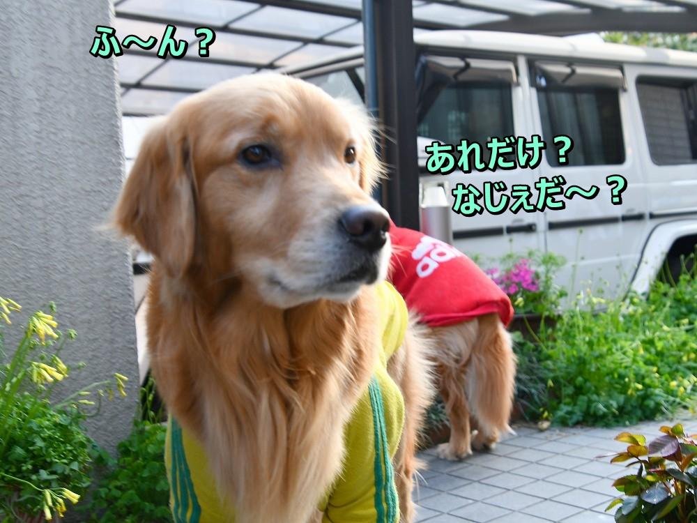 DSC_4640あ~
