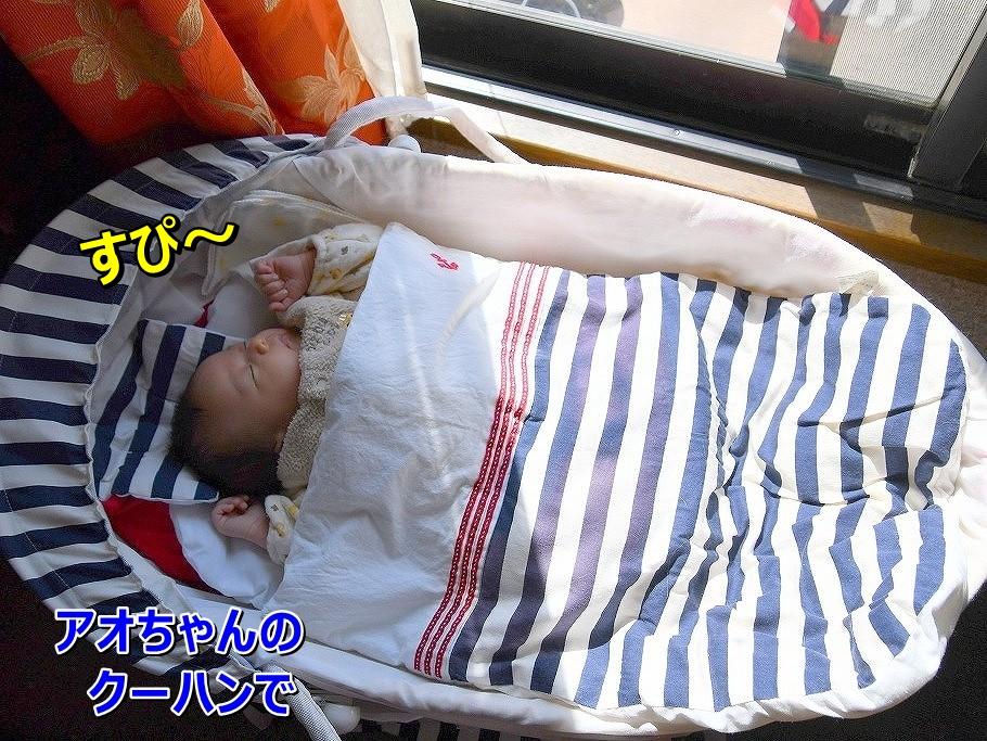 DSC_4446アオちゃんのクーハンみっけ