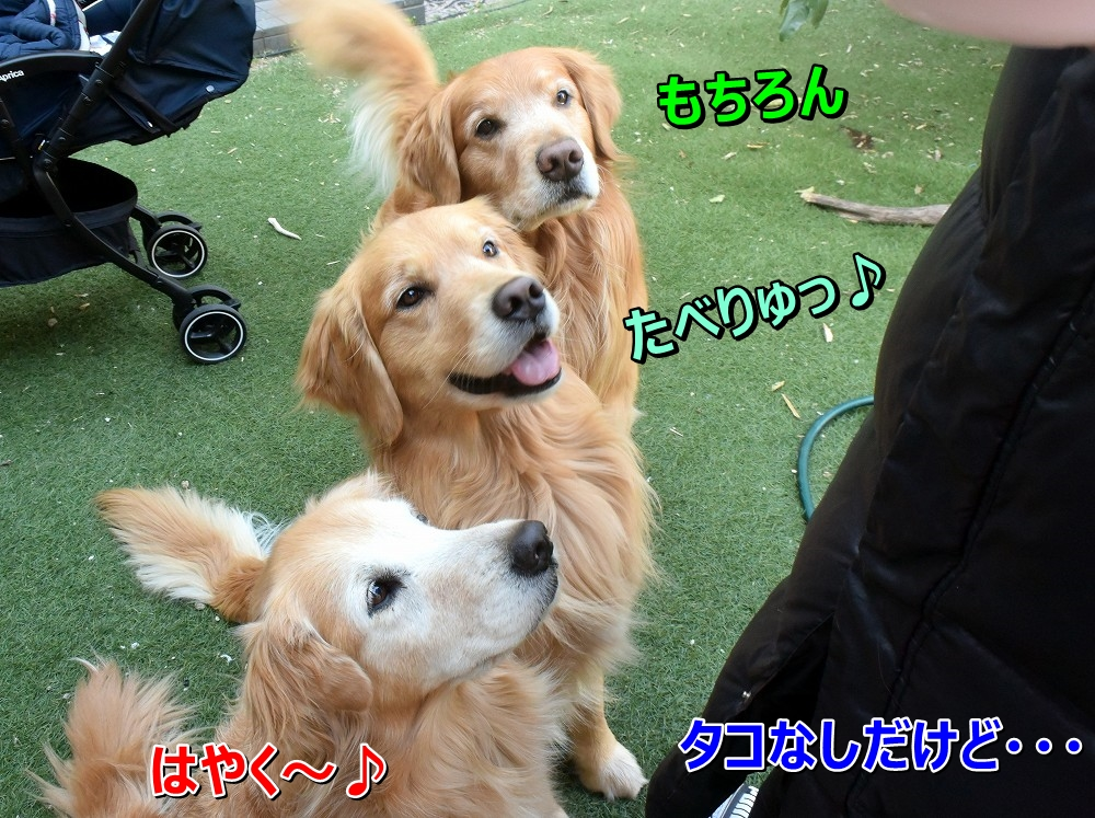 DSC_8686きらきら