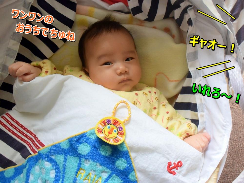 DSC_8649ヴィっちゃん?