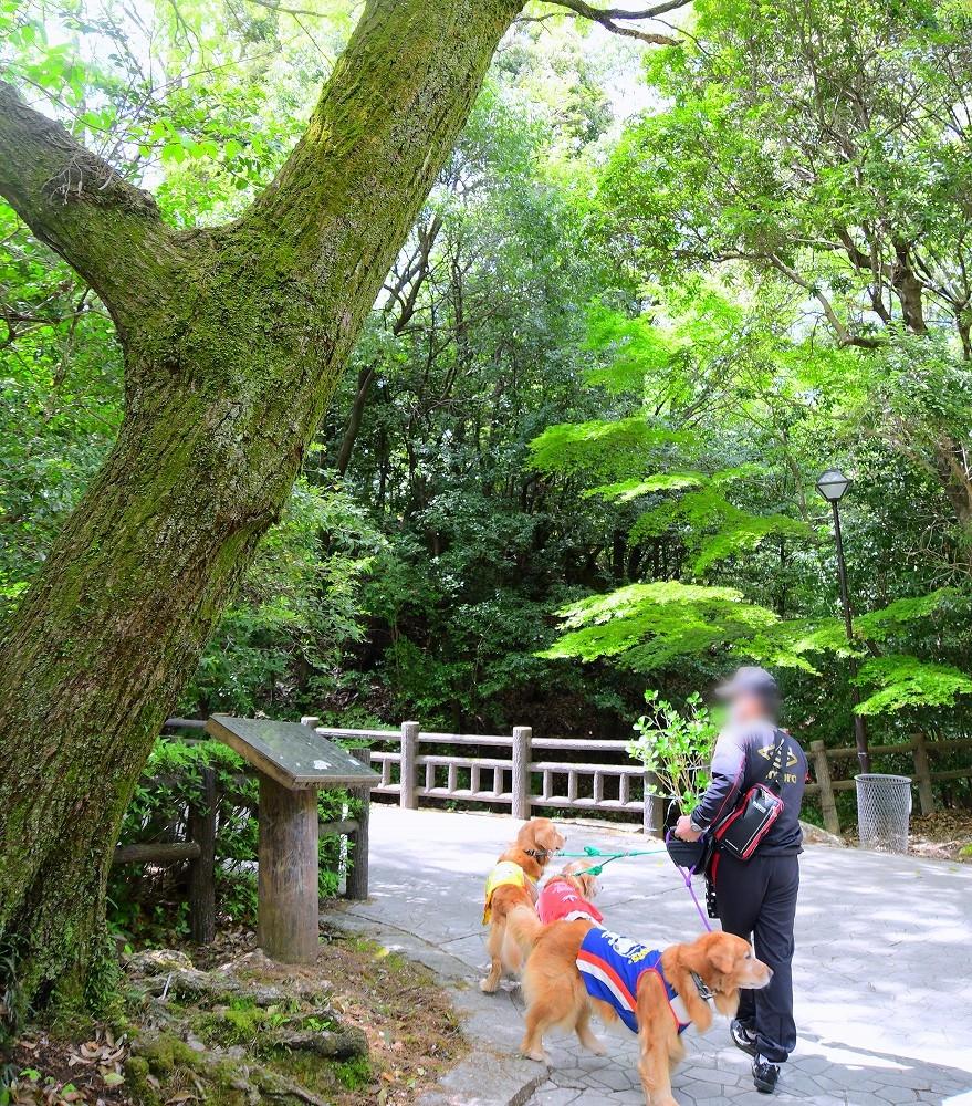 DSC_5756公園お散歩♪