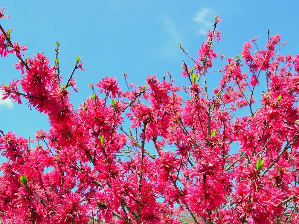 DSC_5847何の花でしょう