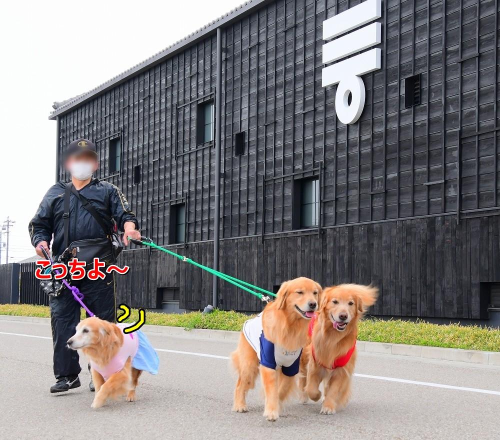 DSC_6063半田運河散歩