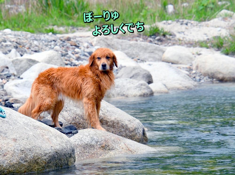 DSC_6863ぼーりゅおねがい