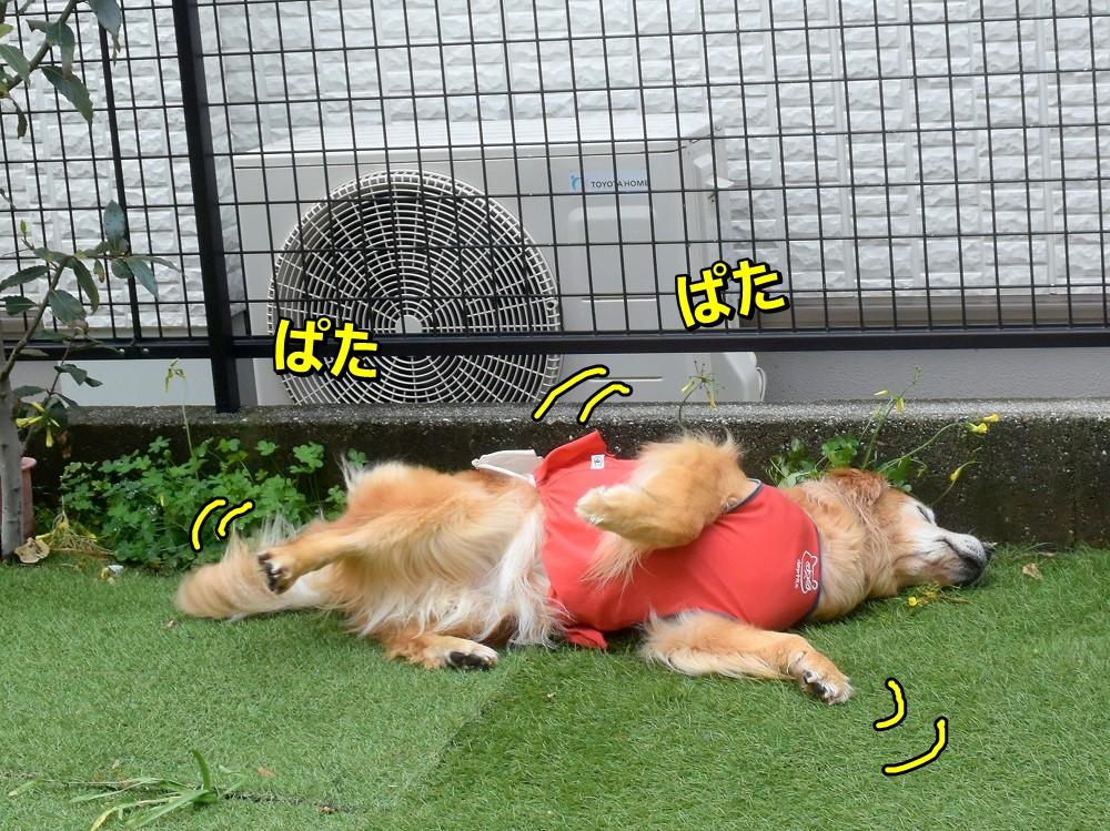 DSC_8758しゅりしゅり~