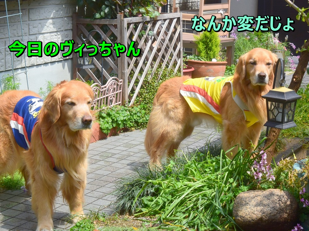 DSC_8759じ~henndaje
