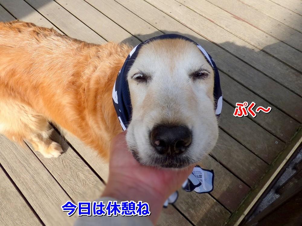 P1050271ぷく~