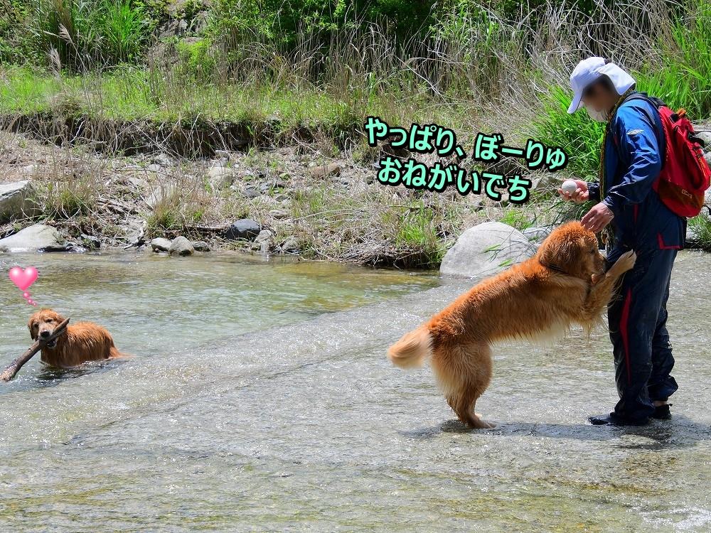DSC_6623ぼくちんボール