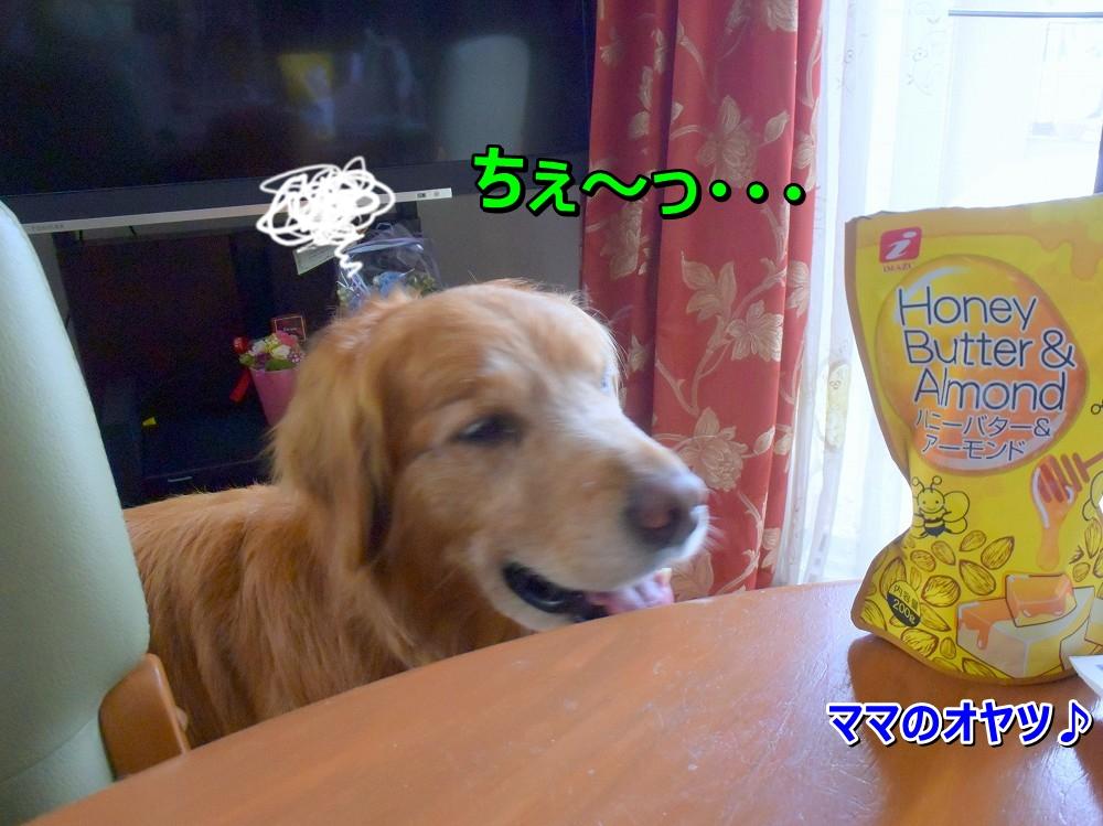 DSC_9123ちぇ~