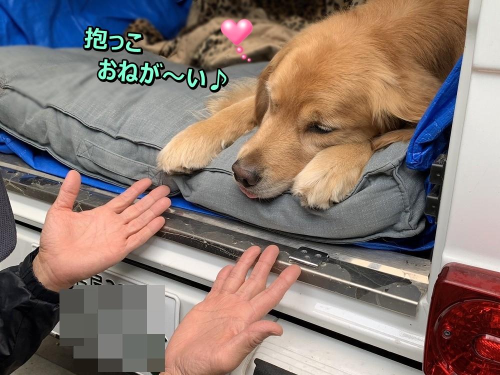 抱っこおねが~い