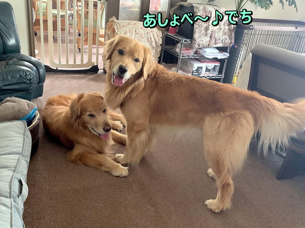 IMG_4465あしょべ~のら