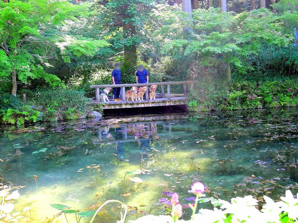 DSC_7475幻想的な池に見える?