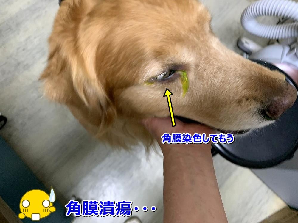 IMG_4537点眼麻酔