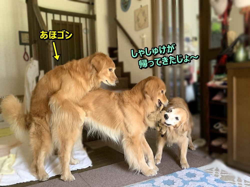 IMG_4562しょれしょれ~