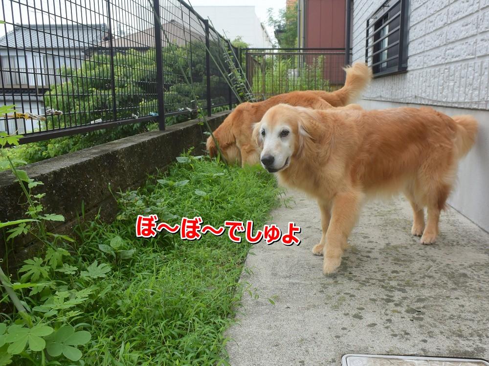 DSC_9399ぼ~ぼ~