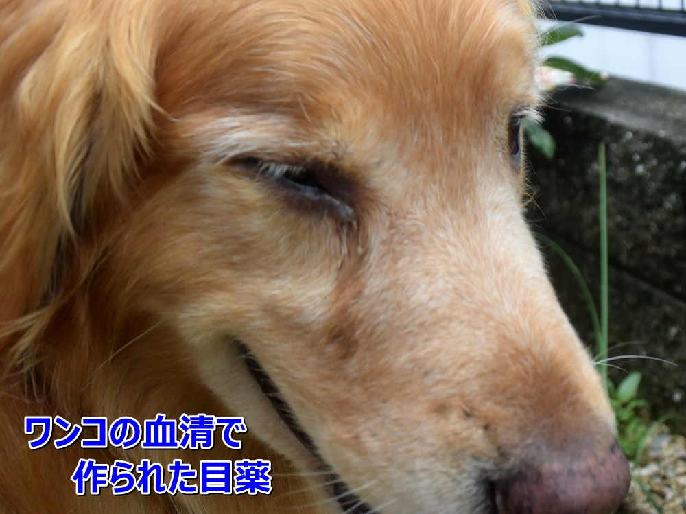 DSC_9406血清で作られた目薬